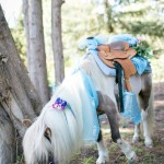 Miniature Horse Birthday Parties